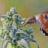 Hummingbird+Warrior